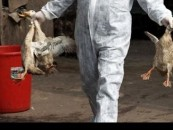 RED Alert! Bird Flu Hits Lagos