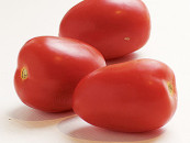 Tomatoes 'important in prostate cancer prevention'