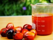Palm oil has the potency to replace hydrocarbons as Nigeria??s mega export earner, says Oroh