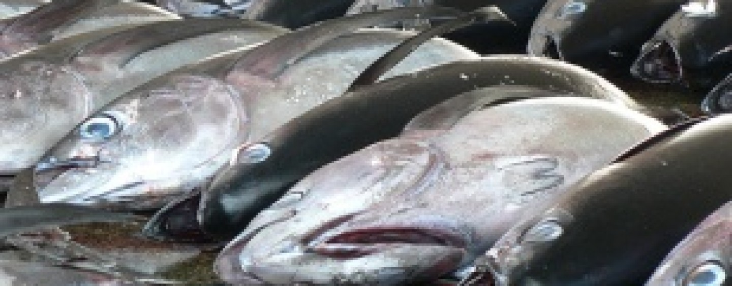 Pan-Africa Project to Focus on Potential of Fish Trade May Salvage Food Sector's $5b yearly loss