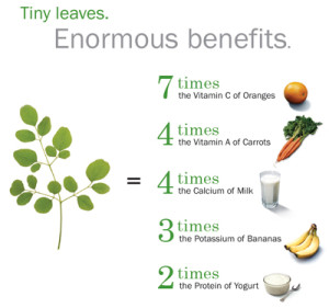 Moringa Tiny Leaves with enormous benefits