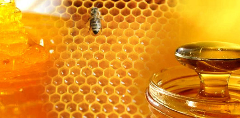 Apiculture will solve health and unemployment problems – Dr. Akunne