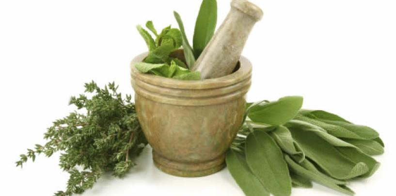 Laws to regulate practice of herbal medicine should be enabled – Joseph Jiya