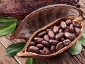 Nigeria makes ₦472bn from cocoa, others