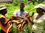 AfDB plans women empowerment in agriculture through technology