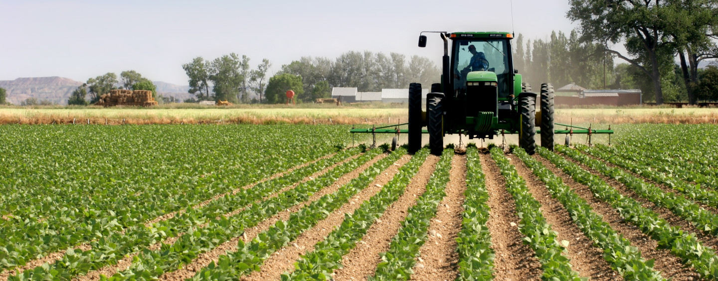 Focus on agriculture'll reduce food imports —Utomi