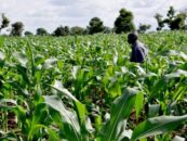 Agric Secretariat Set to Cut Foodstuff Prices in Abuja
