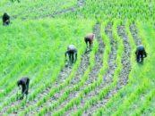 Fertilizer Plants to Produce One Million Tonnes to Boost Farming