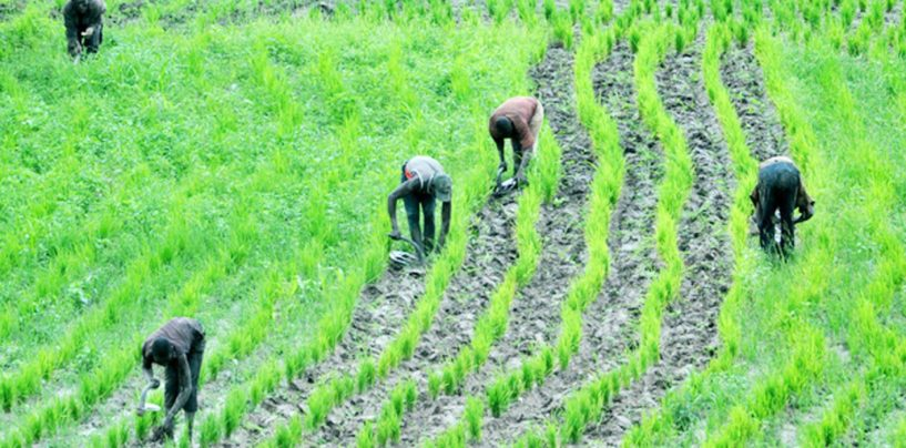 Fertilizer Plants to Produce One Million Tonnes to Boost Farming