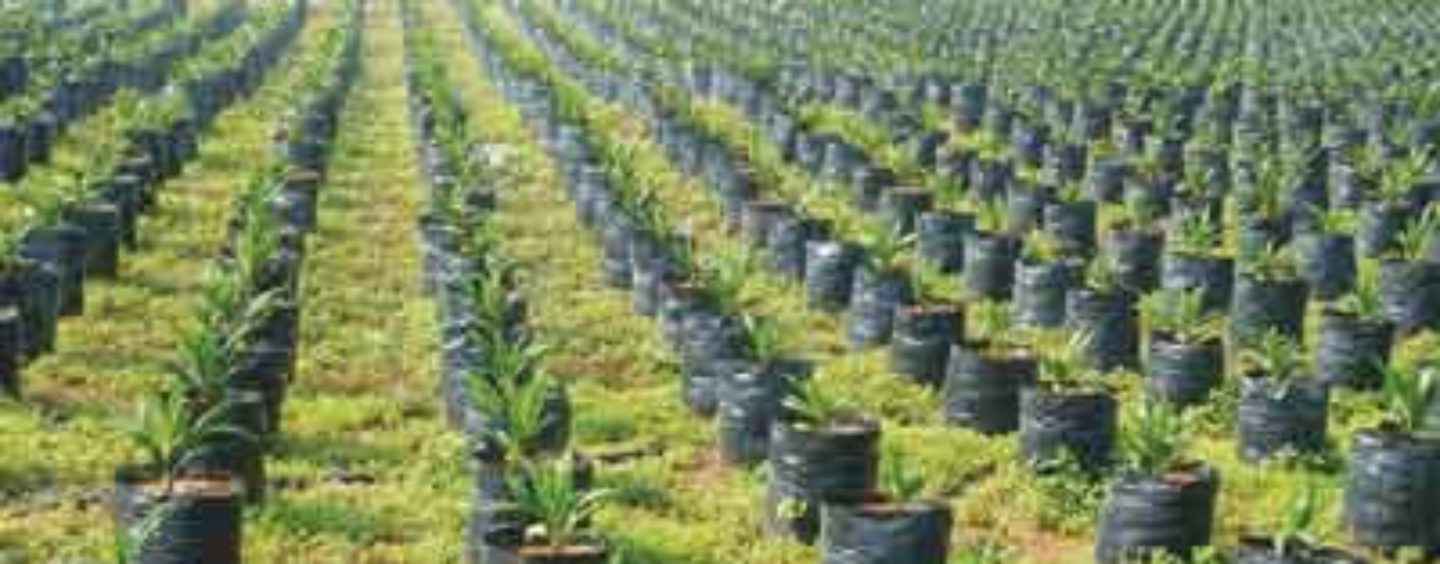 Farmers, CBN Differ Over Agricultural Policies, Programmes