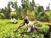 Nigeria Moves to Stop Asians From Having Direct Dealings With Farmers